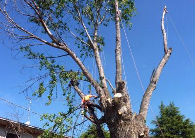 Abbattimenti controllati tree climbing