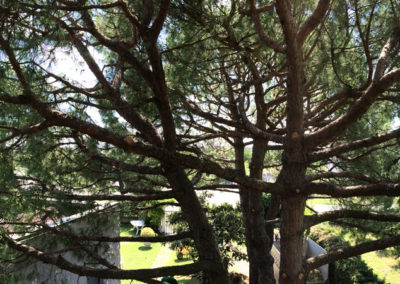 Potatura-alberi-alto-fusto